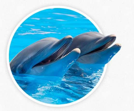 Methode der Delfintherapie - Fotos und Informationen bei therapynemo.com