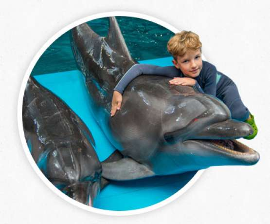Indikationen der Delfintherapie - Fotos und Informationen bei therapynemo.com